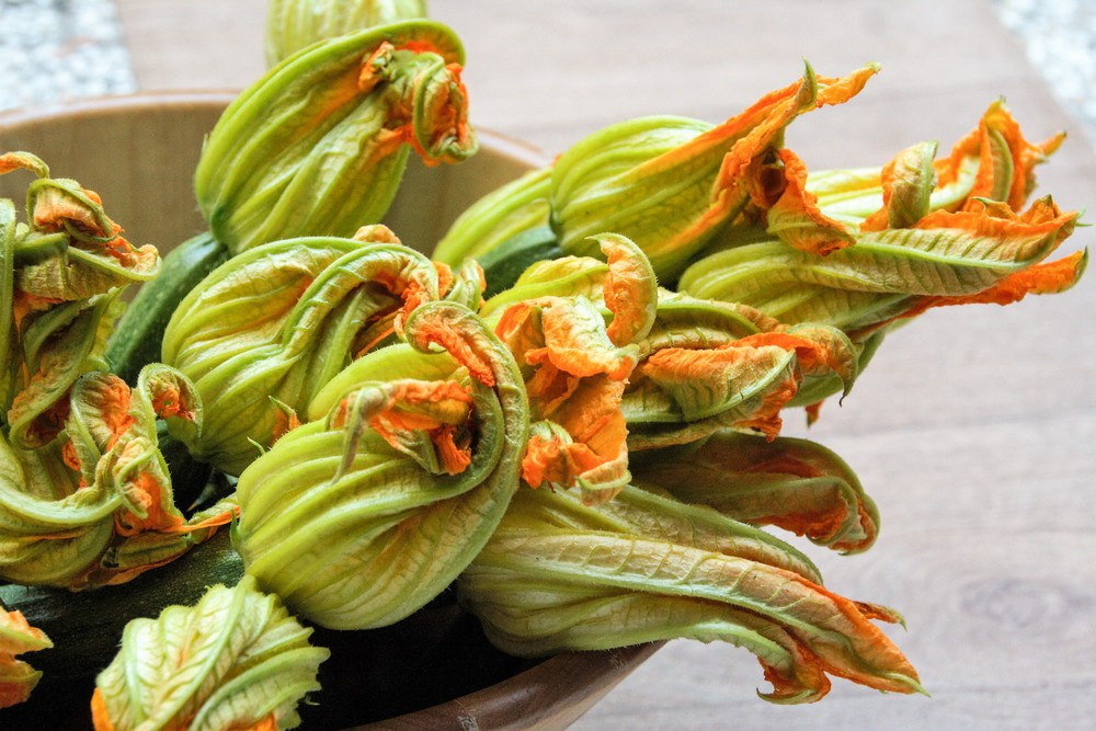 A magnificent bouquet of zucchini flowers
